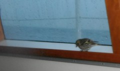 2012-10-06 19h07 en route vers Roscoff petit oiseau carré.JPG