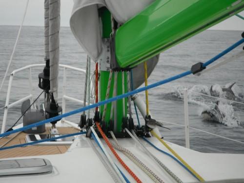 22-3-12 9h15 petit oiseau + dauphins au milieu deu golf de Gascogne.JPG