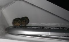 2012-10-06 20h en route vers Roscoff petits oiseaux hublot roof.JPG