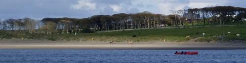 vaches sur la plage de Mullaghmore.jpg